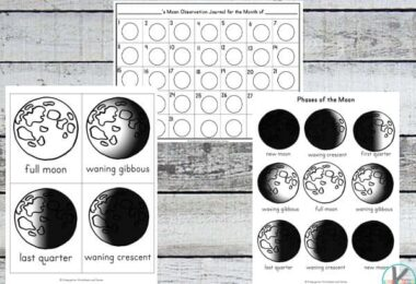 FREE Moon Phases Worksheets