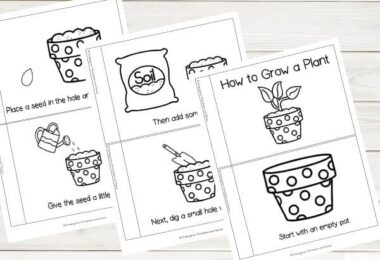 FREE Grow a Plant Sequencing Worksheets