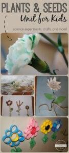 plant activities for kindergarten