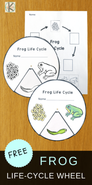 FREE Frog Life-Cycle-Wheel to help kids learn about life cycles plus 21 Life Cycle of a Frog for Kids Resources #lifecycles #frogs #froglifecycles #lifescience #freeprintables #preschool #kindergarten
