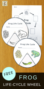 life-cycle-of-a-frog-for-kids