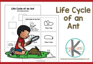 Learn about the ant life cycle with this free printable worksheet for prek, kindergarten, and first grade kids.