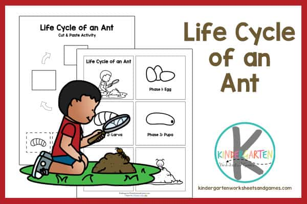 FREE Life Cycle Of An Ant Printable