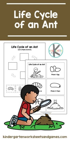 FREE Life Cycle of an Ant - these fun worksheets for kids help kids learn about life cycles with cut and paste worksheets and cards #lifecycles #freeworksheets #kindergartenscience
