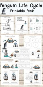 Penguin Life Cyle Worksheets