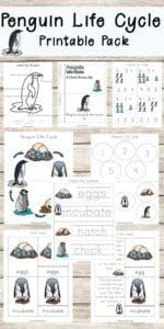 Penguin Life Cyle Worksheets