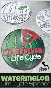 watermelon life cycle printable spinner