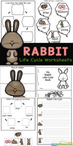 Life Cycle of a Bunny Worksheet