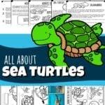 sea-turtles-thumbnail-150x150