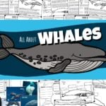 whales-cover-tpt-150x150