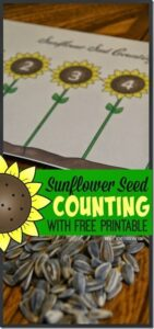 counting sunflower activity
