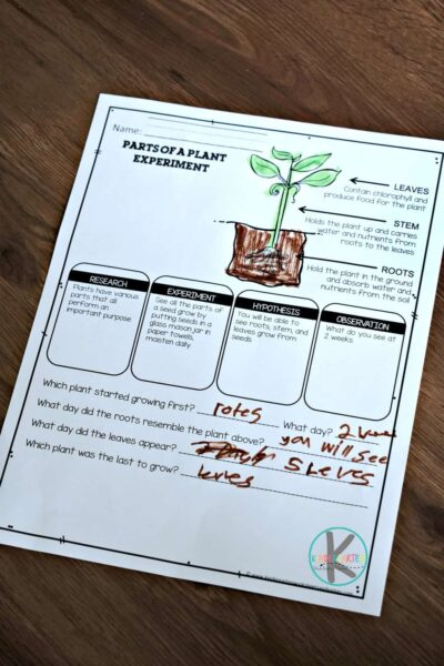 free parts of a plant worksheets for kids to do alongside plants science experiment for prek, kindergarten, and first grade students