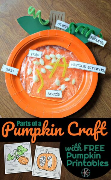 Sneak in some fun pumpkin science this October with a super cute and fun-to-make Parts of a Pumpkin Craft.  This pumpkin craft is easy to make with toddler, preschool, pre k, kindergarten, and first grade students. Plus it includes a pumpkin science worksheets perfect for making learning fun this fall.
