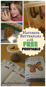 life cycle of a butterfly printables 2