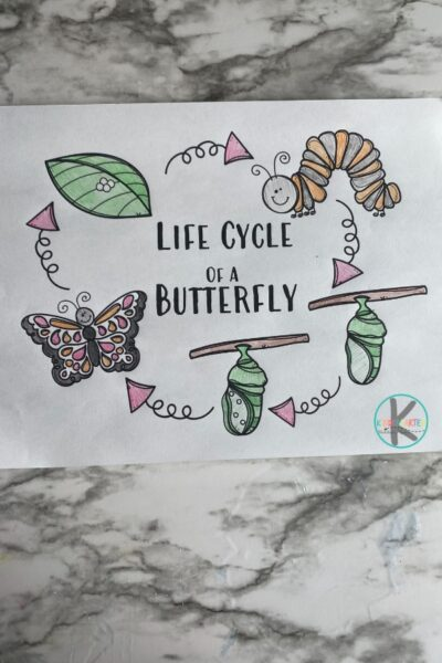 Learn about the life cycle of a butterfly with this super cute, simple Butterfly Life Cycle Craft. In spring we start to see butterflies appear and the amazing metamorphosis that happens as they go from caterpillar to chryssalis to butterfly is super cool. Use thislife cycle of a butterfly craft for toddler, preschool, pre-k, kindergarten, and first grade students to learn about these amazing insects!Simply print pdf file with butterfly life cycle printable and you are ready to play and learn about butterflies for kids!