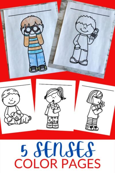 Is your preschool, kindergarten, or first grade student learning about the 5 senses for kids? These handy 5 senses coloring pages are a greaty way to introduce the five sense in a way that isn't an overly complicated. These five senses coloring pages introduce children to the sense of taste, smell, sight, hearing, and feeling. Simply download pdf file withfive senses coloring pages for preschool and you are ready to play and learn with a fun5 senses activity for kids!