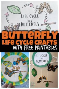 Learn about the life cycle of a butterfly with this super cute, simple Butterfly Life Cycle Craft. In spring we start to see butterflies appear and the amazing metamorphosis that happens as they go from caterpillar to chryssalis to butterfly is super cool. Use thislife cycle of a butterfly craft ideas for toddler, preschool, pre-k, kindergarten, and first grade students to learn about these amazing insects!Simply download pdf file with butterfly life cycle printable and you are ready to play and learn about butterflies for kids!