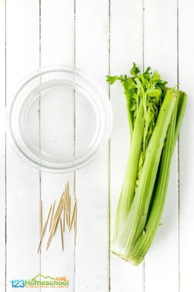 How to grow celery in water