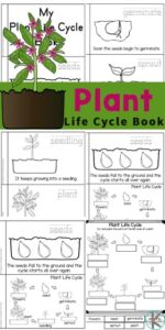 Kids will love learning about the life cycle of a plant with this free Plant Life Cycles reader. Children will love learning about how plants grow from tiny seeds, into plants, and big trees while reading through this emergent reader. This life cycle of a plant printable book is a great introduction to plant science for preschool, pre-k, kindergarten, first grade, 2nd grade, 3rd grade, and 4th graders. Simply print pdf file with life cycle of a plant printable and you are ready to play and learn aboutplant life cycle for kids.