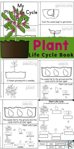 Kids will love learning about the life cycle of a plant with this free Plant Life Cycles reader. Children will love learning about how plants grow from tiny seeds, into plants, and big trees while reading through this emergent reader. This life cycle of a plant printable book is a great introduction to plant science for preschool, pre-k, kindergarten, first grade, 2nd grade, 3rd grade, and 4th graders. Simply download pdf file with life cycle of a plant printable and you are ready to play and learn aboutplant life cycle for kids.