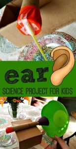 ear science project for kids