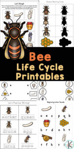 Grab these bee printables to teach kids about the life cycle of a bee while sneaking in some math and literacy review too! These bee worksheets are prefect for preschool, pre-k, kindergarten, and first graders too. These bee activities include over 50+ pages of free bee printables to make learning fun. Simply download pdf filewithbee life cycle worksheets and you are ready to play and learn about thebee life cyle in kindergarten science.