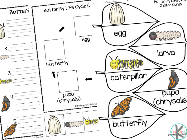 life cycle of a butterfly worksheet for kindergarten