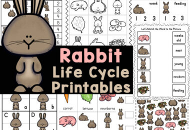 Learn about rabbit life cycle along with themed math and litearcy with these rabbit worksheets. These rabbit printables are perfect for your spring theme!