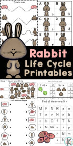 Make learning about the rabbit life cycle fun for kids while sneaking in some math and litearcy with these rabbit worksheets. These rabbit printables are perfect for preschool, pre-k, kindergarten, and first graders. This HUGE pack of over 50 pages will not only introduced students to the life cycle of a rabbit, but includes alphabet matching, mazes, vocabulary cards, tracing letters, tracing numbers, rabbit i spy worksheet, couting, addition, subtraction, patterns, and more. Simply download pdf file withbunny worksheets and you are ready to play and learn in your spring theme!