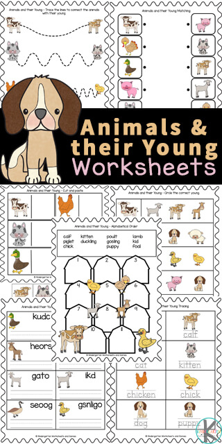 Children will have fun learning about animals with these animals and their young worksheets. In this set are a variety of animals and their young ones worksheet choices for preschool, pre-k, kindergarten, first grade, 2nd grade, 3rd grade, and 4th graders too. We have simple animals and their babies worksheet optoins for young children, matching baby animals to their mothers, cute animal cut and paste, tracing animal names, unscrambling letters, and more. Simply print animal worksheets for kindergarten and you are ready to play and learn in your nextanimal theme orzootheme.