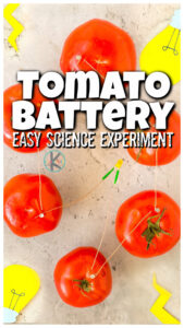 Kids are always impressed when you can use common household produce to produce electricity. This spin on the classic potato clock or lemon battery uses a juicy, red TOMATO! In this amazing tomato battery your children will use a couple simple materials to make atomato powered light. Thistomato battery experiment is for all ages from preschool, pre-k, kindergarten, and lementary age students in first grade, 2nd grade, and 3rd grade tooas they explore creating a circuit. This electricity experiment for kidsis sure to WOW and get kids excited about kindergarten science.