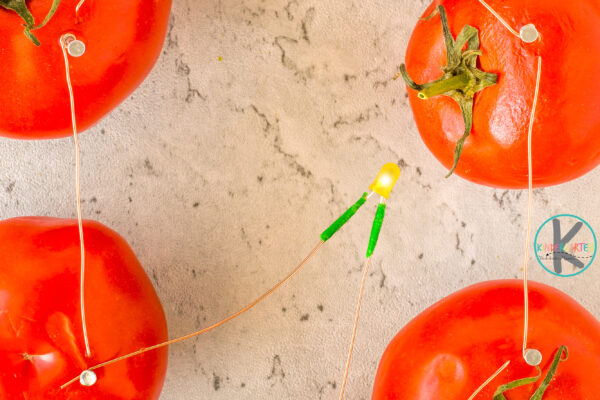 Tomato Battery Experiment
