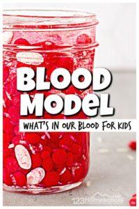 blood model for kids