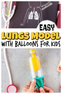balloon lungs model for kids