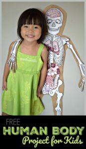 human body skeletal project for kids