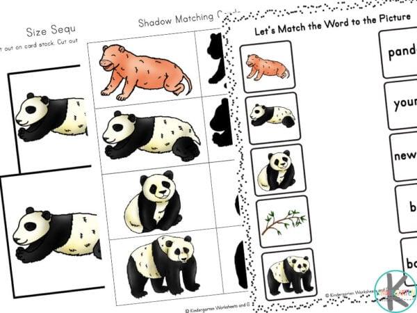 life cycle of a panda