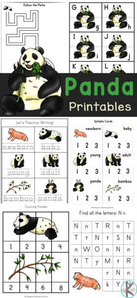 Kids are fascinated by the gentle, giant, bamboo-loving panda bears from China. These super cute panda worksheets draw on children's natural interest in these magnificant pandas for kids to sneak in some fun math and literacy skills. This HUGE pack of free panda printables for preschool, pre-k, kindergarten, and first graders includepanda coloring pages, counting, alphabet matching, letter tracing, life cycle of a panda, and more! Simply printanimal worksheet printables and you are ready to play and learn!