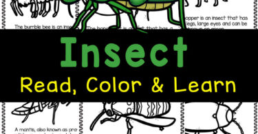 Learn about creepy crawly bugs with these cut insect coloring pages. Use the free printables to read and learn about fourteen different insects for kids.